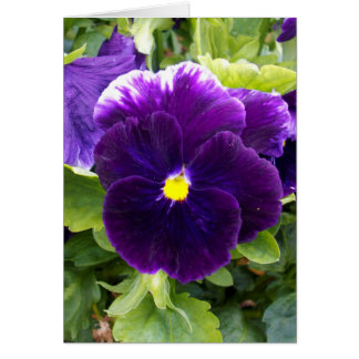 Deep_Purple_Pansy,_Small_Greeting_Card Card
