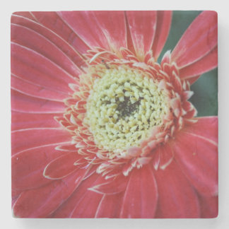 Deep Red Gerbera Flower Stone Coaster