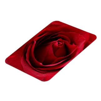 deep red rose magnet