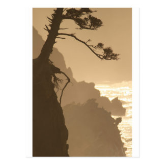 Deep Roots Postcard