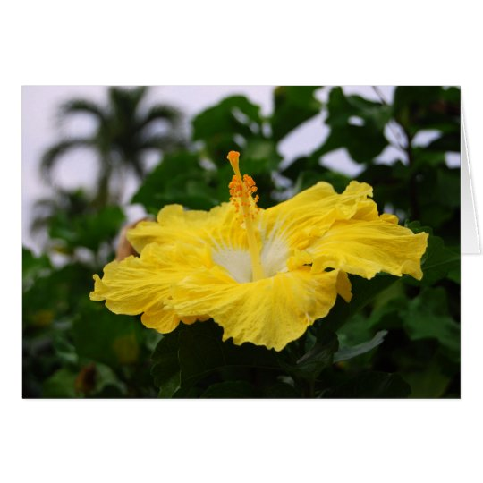 Deep Yellow Hibiscus Card