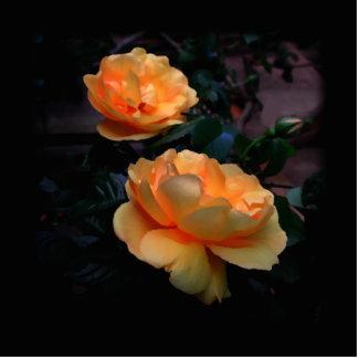 Deep Yellow - Orange Roses, on Black. Custom Photo Cut Outs