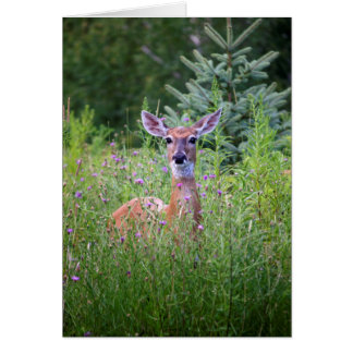 Deer and flowers nature photo card