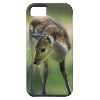 Deer are so sweet iPhone 5 cases