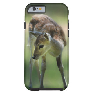 Deer are so sweet tough iPhone 6 case
