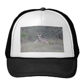 Deer at the Ranch Trucker Hat