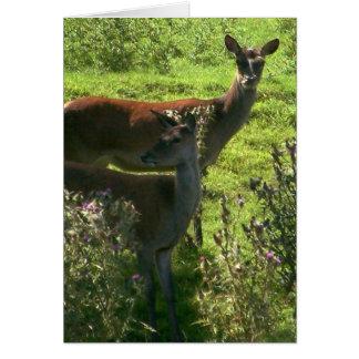 Deer | card