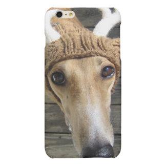 Deer dog - cute dog - whippet