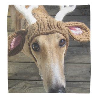 Deer dog - cute dog - whippet bandana