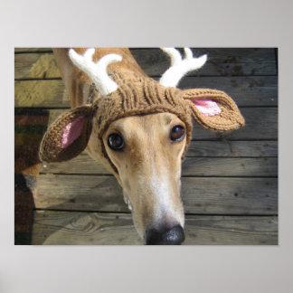 Deer dog - cute dog - whippet poster