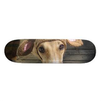Deer dog - cute dog - whippet skate board