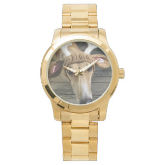 Deer dog - cute dog - whippet watch