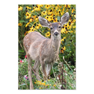 Deer Fawn in Flower Garden Photo Print