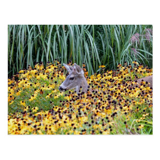 Deer Fawn in Flower Garden Post Cards