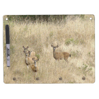 Deer Fawns Wildlife Animals Photography Dry Erase Board With Keychain Holder