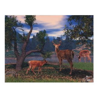 Deer Gathering Postcard