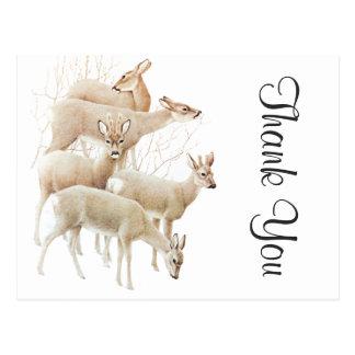 Deer Herd In Snow, Vintage Illustration Postcard