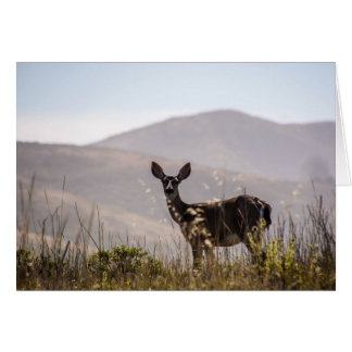 Deer, I am thinking of you... Card