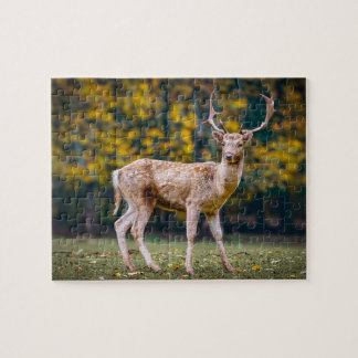 Deer In Late Summer Jigsaw Puzzle