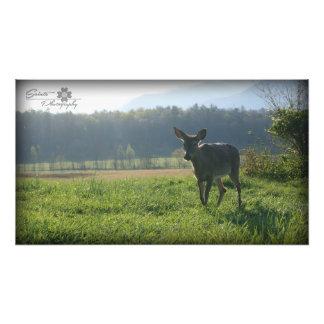 Deer in Mist, Cades Cove Photo Print