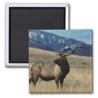 Deer in the Country Magnet