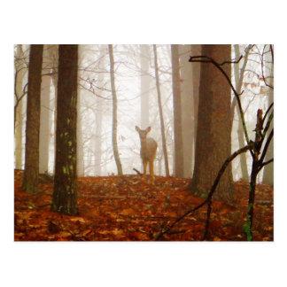 Deer in the Mist Postcard