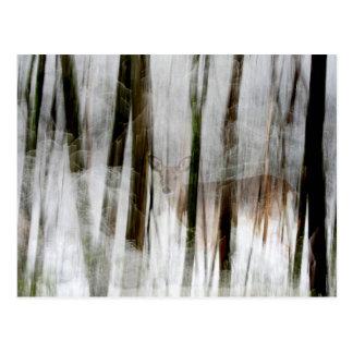 Deer in the Winter Woods Abstract Postcard