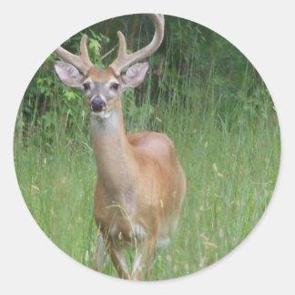 Deer in Velvet Classic Round Sticker