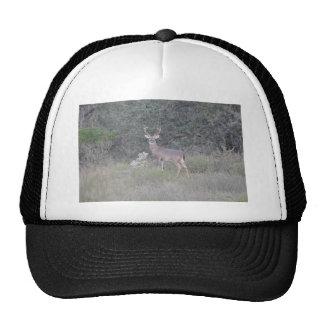 Deer items trucker hat