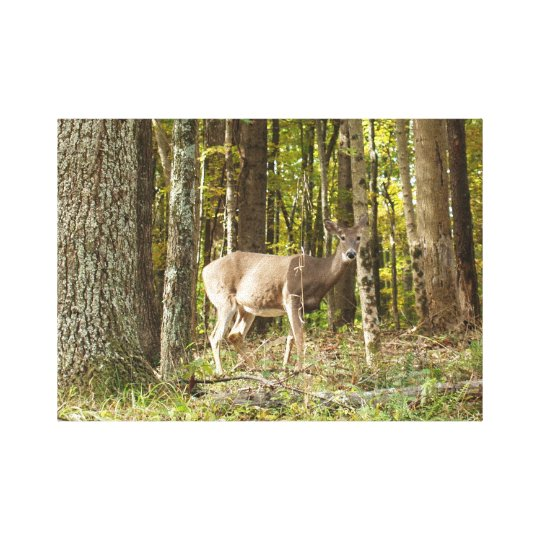 Deer Me Canvas Print