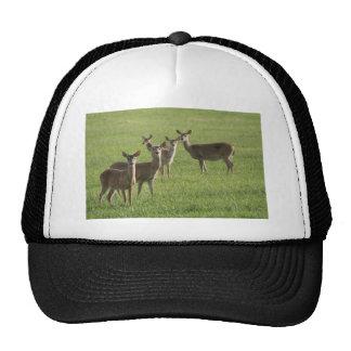 Deer Paradise Trucker Hat