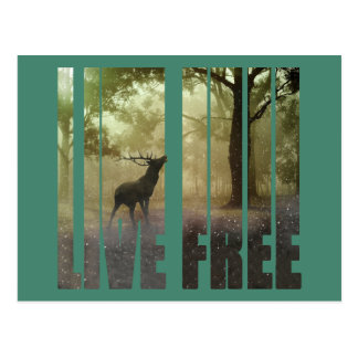 Deer Photo Print Postcard