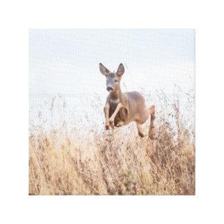 deer photograph canvas print