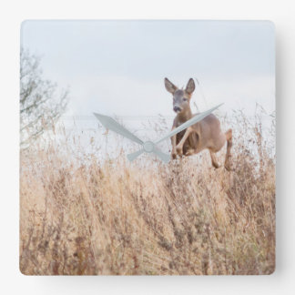 deer photograph clock