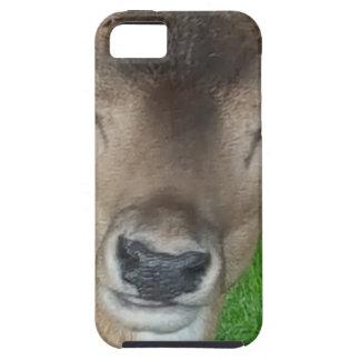 Deer Portrait Photography Wildlife iPhone 5 Case