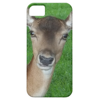 Deer Portrait Photography Wildlife iPhone 5 Cover