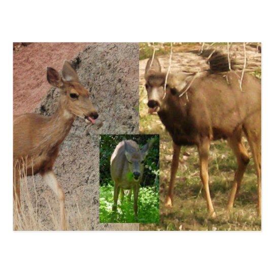 Deer Raspberries III Postcard