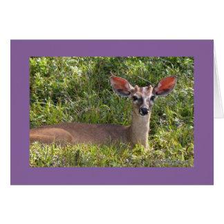Deer Resting in Belize Blank Card