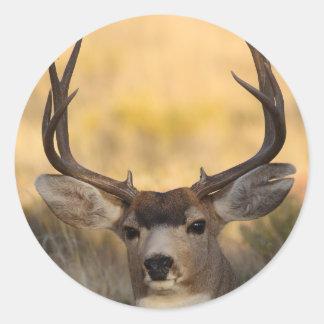deer round sticker