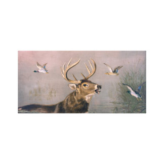 Deer Stag Stretched Canvas Art