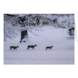 Deer walking in snow notecard