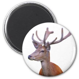 Deer woodland forest animal photo magnet