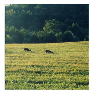 Deers Grazing Acrylic Wall Art