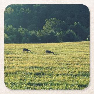 Deers Grazing Square Paper Coaster