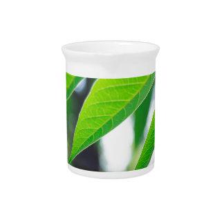 Defocused and blurred branch ailanthus beverage pitcher