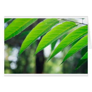Defocused and blurred branch ailanthus card
