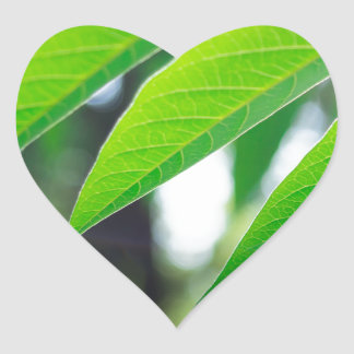 Defocused and blurred branch ailanthus heart sticker