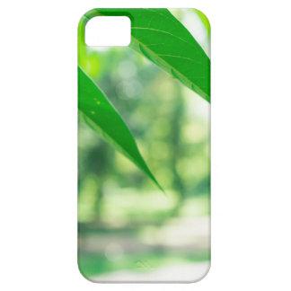 Defocused and blurred branch ailanthus iPhone 5 case
