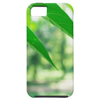 Defocused and blurred branch ailanthus iPhone 5 cases
