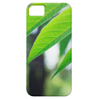 Defocused and blurred branch ailanthus iPhone 5 covers